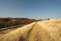 Strada attraverso erba asciutta gialla con il legno avanti Immagine Stock Libera da Diritti