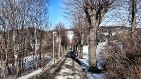 Strada attraverso gli alberi Fotografia Stock