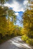 Strada attraverso gli alberi di autunno Fotografia Stock Libera da Diritti
