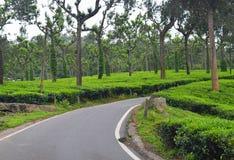 Strada attraverso i giardini di tè verde fertili in Munnar, Kerala, India fotografie stock libere da diritti
