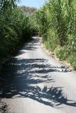 Strada attraverso il boschetto di bambù Fotografia Stock Libera da Diritti