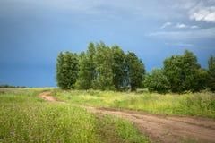 Strada attraverso il campo verde con gli alberi di betulla dopo una tempesta immagine stock