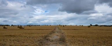 Strada attraverso il giacimento di grano Fotografia Stock