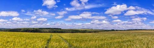 Strada attraverso il giacimento di grano dorato, cielo blu perfetto paesaggio rurale maestoso fotografie stock libere da diritti
