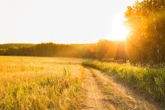 Strada attraverso il giacimento di grano nell'ambito di alba Immagini Stock Libere da Diritti
