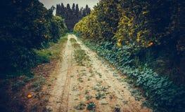 Strada attraverso il giardino dell'agrume Fotografie Stock Libere da Diritti