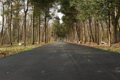 Strada attraverso il legno Immagine Stock Libera da Diritti