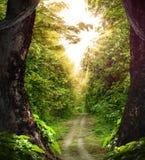 Strada attraverso il legno Fotografie Stock