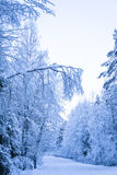 Strada attraverso il legno di inverno Fotografia Stock