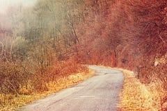 Strada attraverso il legno nebbioso Fotografia Stock