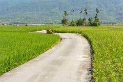 Strada attraverso l'azienda agricola della risaia Fotografia Stock Libera da Diritti