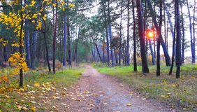 Strada attraverso la bella foresta di autunno al tramonto Immagini Stock Libere da Diritti