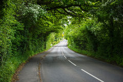 Strada attraverso la campagna verde Immagine Stock