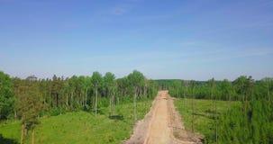 Strada attraverso la foresta