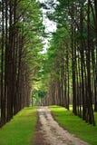Strada attraverso la foresta. Fotografia Stock