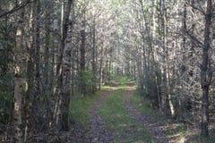 Strada attraverso la foresta Fotografia Stock