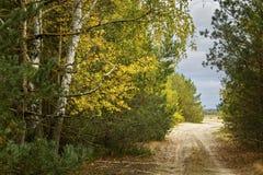 Strada attraverso la foresta della foresta di autunno Immagini Stock Libere da Diritti