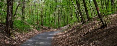 Strada attraverso la foresta della primavera Fotografia Stock Libera da Diritti