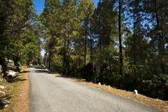 Strada attraverso la foresta, distretto di Uttarkashi, Uttarakhand, India Fotografia Stock