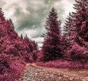 Strada attraverso la foresta - filtro infrarosso della montagna fotografie stock libere da diritti