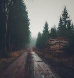 Strada attraverso la foresta nebbiosa Fotografie Stock