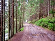 Strada attraverso la foresta nella pioggia Immagine Stock