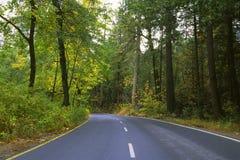 Strada attraverso la foresta in valle del Yosemite Fotografia Stock Libera da Diritti