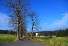 Strada attraverso un viale degli alberi Fotografie Stock