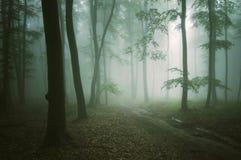 Strada attraverso una bella foresta verde immagine stock