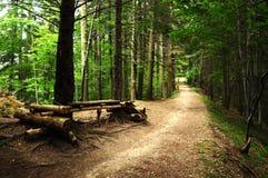 Strada attraverso una foresta spaventosa ad estate Fotografia Stock