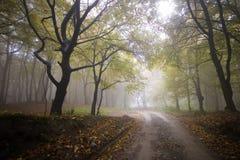 Strada attraverso una foresta variopinta in autunno fotografie stock