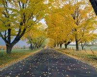 Strada in autunno Fotografia Stock