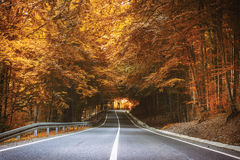 Strada in autunno Fotografie Stock
