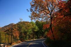 Strada in autunno Fotografie Stock Libere da Diritti