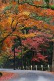 Strada in autunno, Nara, Giappone immagine stock
