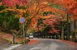 Strada in autunno, Nara, Giappone Fotografia Stock Libera da Diritti