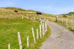 Strada aziendale, campo e mucche fotografie stock libere da diritti