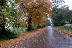 Strada caduta/di autunno. Immagini Stock