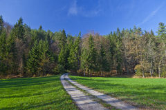 Strada campestre alla foresta Immagine Stock Libera da Diritti
