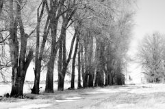Strada campestre allineata albero con neve Fotografia Stock Libera da Diritti