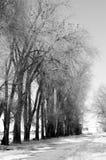 Strada campestre allineata albero con neve Immagine Stock Libera da Diritti