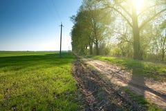 Strada campestre attraverso il campo verde Immagine Stock Libera da Diritti