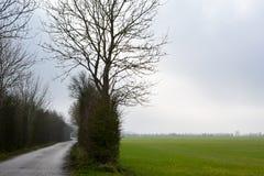 Strada campestre danese Fotografia Stock Libera da Diritti