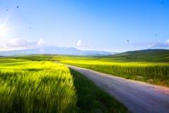 Strada campestre del terreno coltivabile e della molla di arte; campagna Rolling Hills della Toscana immagine stock