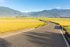 Strada campestre dell'azienda agricola e della risaia Fotografie Stock