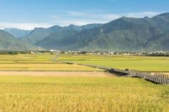 Strada campestre dell'azienda agricola e della risaia Fotografia Stock Libera da Diritti