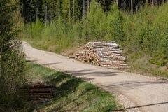 strada campestre della ghiaia in foresta verde con i tronchi di albero in grandi mucchi dal lato immagini stock