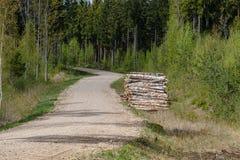strada campestre della ghiaia in foresta verde con i tronchi di albero in grandi mucchi dal lato immagini stock libere da diritti