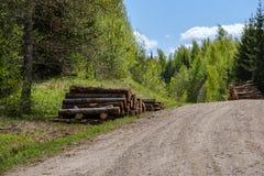 strada campestre della ghiaia in foresta verde con i tronchi di albero in grandi mucchi dal lato fotografia stock