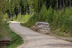 strada campestre della ghiaia in foresta verde con i tronchi di albero in grandi mucchi dal lato fotografie stock libere da diritti